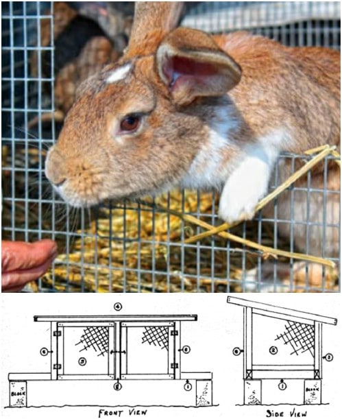 Easy And Inexpensive Rabbit Hutch